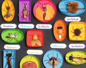 Bricolage pour enfant comment fabriquer une collection d - Comment faire des bricolages ...