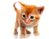 Animal domestique : comment adopter un chaton ?