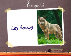 Expose-loups
