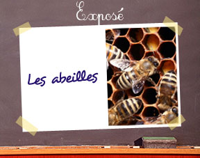 comment faire un expos sur les abeilles en primaire. Black Bedroom Furniture Sets. Home Design Ideas